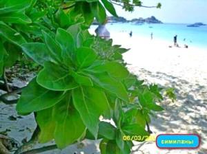 пляжный отдых в марте,отдых на Пхукете