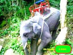 slon-skalolaz
